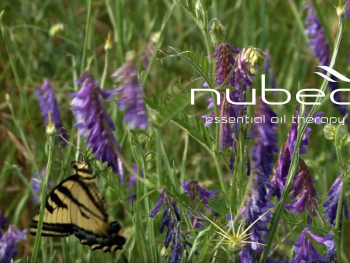 NUBEA // ESSENTIAL OIL THERAPY CAMPAIGN 2019